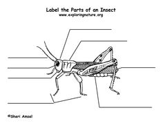 Pin on 3rd Grade Science Unit: Insects (Spring 2013)
