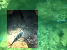 A short diving clip where a selection has been cleared with Lyynifier for iPAD. Underwater Video, See It, Diving, Ipad, Fish, Green, Youtube, Painting, Scuba Diving