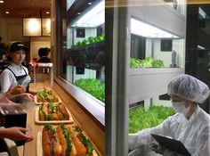 Japanese Subway Grows Lettuce In House to Top Their Sandwiches