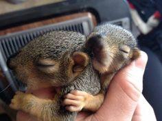 Napping Buddies <3