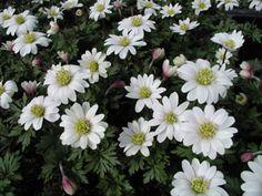 Frühlingsgarten in Weiß