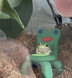 Cute Little Animals, Cute Funny Animals, Baby Animals, Frog Pictures, Cute Pictures, Pet Frogs, Frog Art, Frog And Toad, Indie Kids