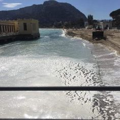Offerte di lavoro Palermo  La pianta va in putrefazione ma non si tratta di materiale inquinante  #annuncio #pagato #jobs #Italia #Sicilia Palermo schiuma sul litorale di Mondello: ma è la Posidonia