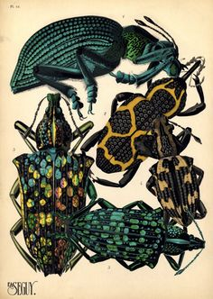 Eugène Séguy (1890–1985) was a French entomologist whopublished many portfolios of illustrations and designs from the turn of the century to the 1930s w