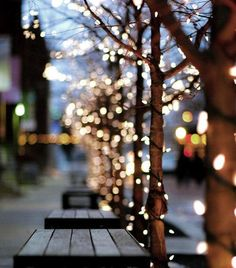 street | tree | strings of light | winter | christmas decoration