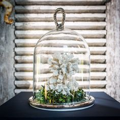 An elegant glass cloche with a rustic rope design inspired by Renaissance garden elegance.  A chic marble base.  Fill with shells, driftwood or other beachcomber finds or fill with cheeses and other culinary delights.