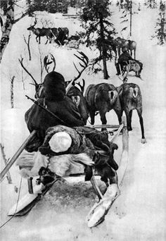 Evacuation of wounded soldiers on the reindeer sledding. World War II. The Soviet Union, Karelian Front, Arctic,1942. Reindeer battalion - Reindeer army #WWII #Arctic #ReindeerBattalion #Russia #Nenets