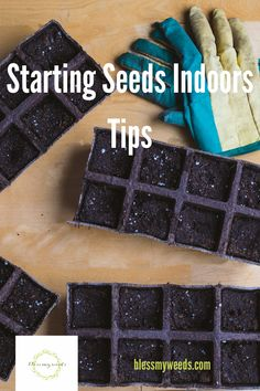 7 Hacks For Starting Seeds Indoors Starting Vegetable Seeds, Starting Plants From Seeds, Starting Seeds Indoors, Seed Starting, Planting Seeds Quotes, When To Plant Seeds, Soil Improvement, Healthy Seeds, Herb Seeds