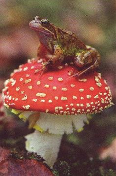 Toad on a frogstool. frog on toadstool! Les Reptiles, Reptiles And Amphibians, Wild Life, Rabbit Cages, Cute Frogs, Mushroom Fungi, Nature Aesthetic, Frog And Toad, Mother Nature