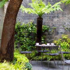 The Keeper's House Tom Stuart Smith, Yucca, Tree Fern, Royal Garden, Palmiers, Royal Academy Of Arts, London Restaurants, Ferns, Beautiful Landscapes