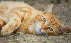 Orange tabby cross stitch pattern cross stitch pattern | Etsy Pretty Cats, Beautiful Cats, Cute Cats, Best Cat Food, Orange Tabby Cats, Ginger Cats, My Animal, Cat Life, Cats And Kittens