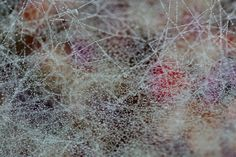 Spider Web, 105 x 70 cm, printed on Alu Dibond, 2014  Photo of a spider web in the mist of an autumn morning.