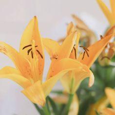 """238 curtidas, 17 comentários - Dayane Nascimento (@dayaneassiis) no Instagram: """"🎶🎵Saio por ai juntando flor por flor...🎵🎶"""""""