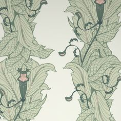 wall paper - venus flytrap