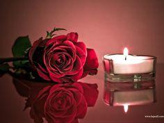 Imagens de Rosas e Flores: Lindas Rosas Vermelhas