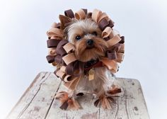 Lion Dog Costume - Pet Halloween Costume by KOCouture on Etsy https://www.etsy.com/listing/162325598/lion-dog-costume-pet-halloween-costume