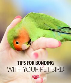 Be your bird's best friend and form a bond with these tips. - Be your bird's best friend and form a bond with these tips. Cockatiel Care, Parakeet Care, Parakeet Toys, Budgie Toys, Parrot Pet, Parrot Toys, Exotic Birds, Colorful Birds, Love Birds Pet