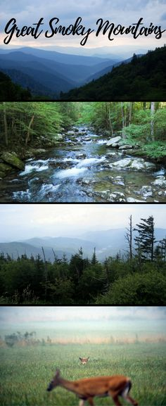 The Ultimate Guide to Great Smoky Mountains National Park.