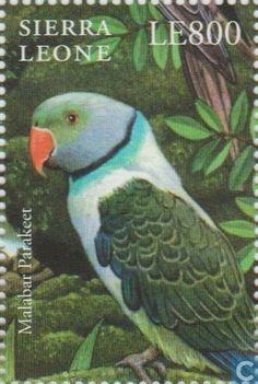 Sierra Leona 2000 - La Cotorra Malabar es una especie de ave psitaciforme de la familia de los Psittaculidae que habita en Asia. La sutil combinación de tonos en el plumaje de este psitácido de larga cola le proporciona camuflaje entre las hojas y el ramaje.