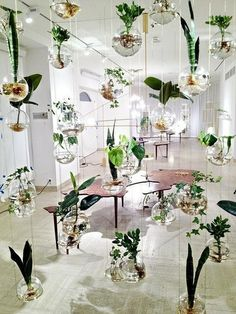 Suspended Planters