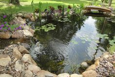 Image result for how to rock in a fish pond