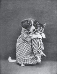 Whittier | Old Novelty Photos of Cats and Dogs (37 pics) | 1Funny.com