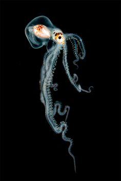 Animais marinhos, ao mesmo tempo em que podem ser assustadores pelo seu tamanho e imponência, são lindos pelo mesmo motivo. E se juntarmos animais marinhos, mais fotografias, mais a beleza de águas claras e do interior dos mares? O resultado, são fotos vencedoras de um concurso no Reino Unido este ano de 2016, e você …
