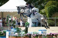 ASTON Chloe, (GBR), MERQUSIO_2765_HB Hunter Jumper, Show Jumping, Chloe, Horses, Horse, Dressage, Barrel Racing