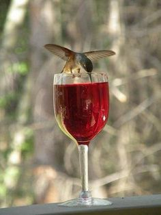 a hummingbird drinking wine