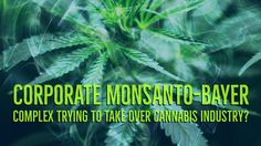 Corporate Monsanto Bayer Complex Trying To Take Over The Cannabis Industry?... http://www.believe.love/3823/corporate-monsanto-bayer-complex-trying-to-take-over-the-cannabis-industry/