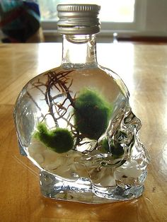 Skull Bottle with Nano Marimo Balls i always needed an excuse to buy one of these skull bottles of tequila... now i have one!!!!!