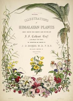 Illustrations of Himalayan plants :chiefly selected from drawings made for the late J. Cathcart, Esquire of the Bengal Civil Service; 1855 : Missouri Botanical Gardens via BHL - title page Botanical Flowers, Botanical Art, Botanical Gardens, Vintage Botanical Prints, Botanical Drawings, Plant Illustration, Botanical Illustration, Vintage Abbildungen, Vintage Books