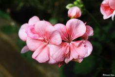 Flower 3 by Mohammad Azam