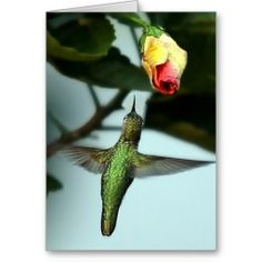 ==>>Big Save on          	Humming bird Birthday Card           	Humming bird Birthday Card Yes I can say you are on right site we just collected best shopping store that haveThis Deals          	Humming bird Birthday Card Here a great deal...Cleck See More >>> http://www.zazzle.com/humming_bird_birthday_card-137027796831739612?rf=238627982471231924&zbar=1&tc=terrest