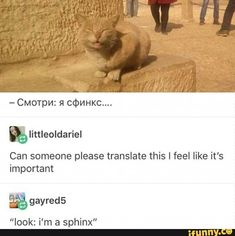 PicturePunches: earn money with memes - Cute Animals Cute Funny Animals, Cute Baby Animals, Funny Cute, Animals And Pets, Cute Cats, Hilarious, Crazy Cat Lady, Crazy Cats, Cat Memes