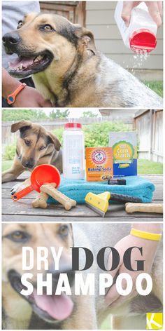 How to Make Dry Dog Shampoo