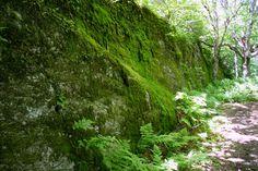 Le sentier, Mont Sutton, Québec, juin 2015 (Sentier de l'Estrie) Outdoors, Plants, Pathways, June, Landscape, Plant, Outdoor Rooms, Off Grid, Outdoor