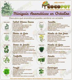 Miniguía de plantas aromáticas en octubre.