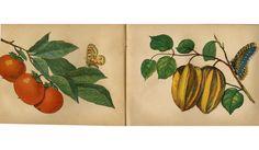 Fruit of brasil