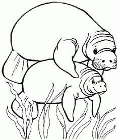 Letter M Manatee animal coloring page Homeschooling Alphabet