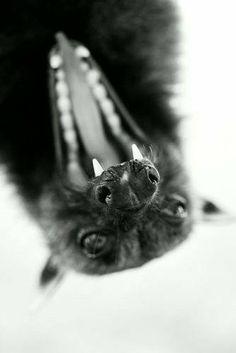 Happy lil bat!