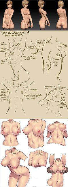 anatomical study ( various angles ) of a female semi realistic character