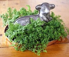 Living Centerpiece  A sweet baby's tears plant makes the perfect bedding for this tin lamb centerpiece. Any low container filled with baby's tears would work as a festive centerpiece