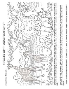 Color the Mother and Baby Giraffe Baby giraffes Worksheets and