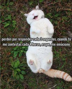 """Gatos Cool publicó en Instagram: """". . . #memesdegatoscool #gatoscool😸 #gatos_cool #feliz #felicidad"""" • Mira todas las fotos y los videos de @gatoscooloficial en su perfil."""