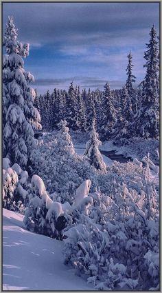 WINTER in NORWAY..... #snow blue forest tree #by Bjørn Berlin Hatling -- 500px.com