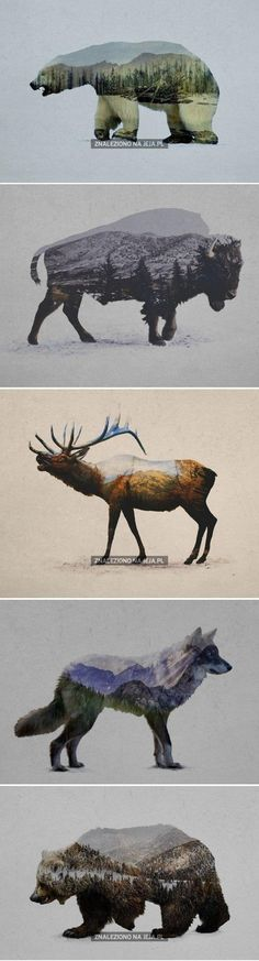 Double exposure - wild animals and nature Animal Drawings, Art Drawings, Montage Photo, Photocollage, Wildlife Art, Double Exposure, Animals And Pets, Wild Animals, Art Inspo