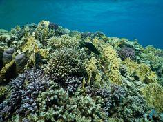 Corals in Abu Dabbab, Marsa Alam, Egypt, Red Sea