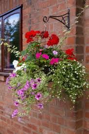 Kwiaty goniczkowe