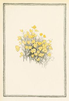 TITLE Yellow flowers. NAMES Smith, Jessie Willcox, 1863-1935 (Artist)